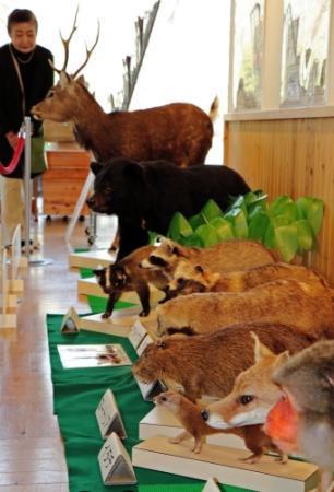 森林野生動物研究会