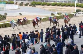 予想 姫路 競馬
